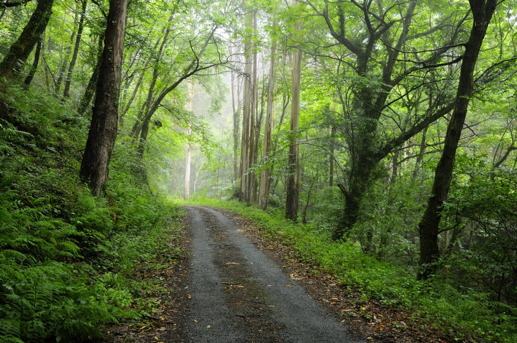 Parque Natural Fragas do Eume - Galicia (España)